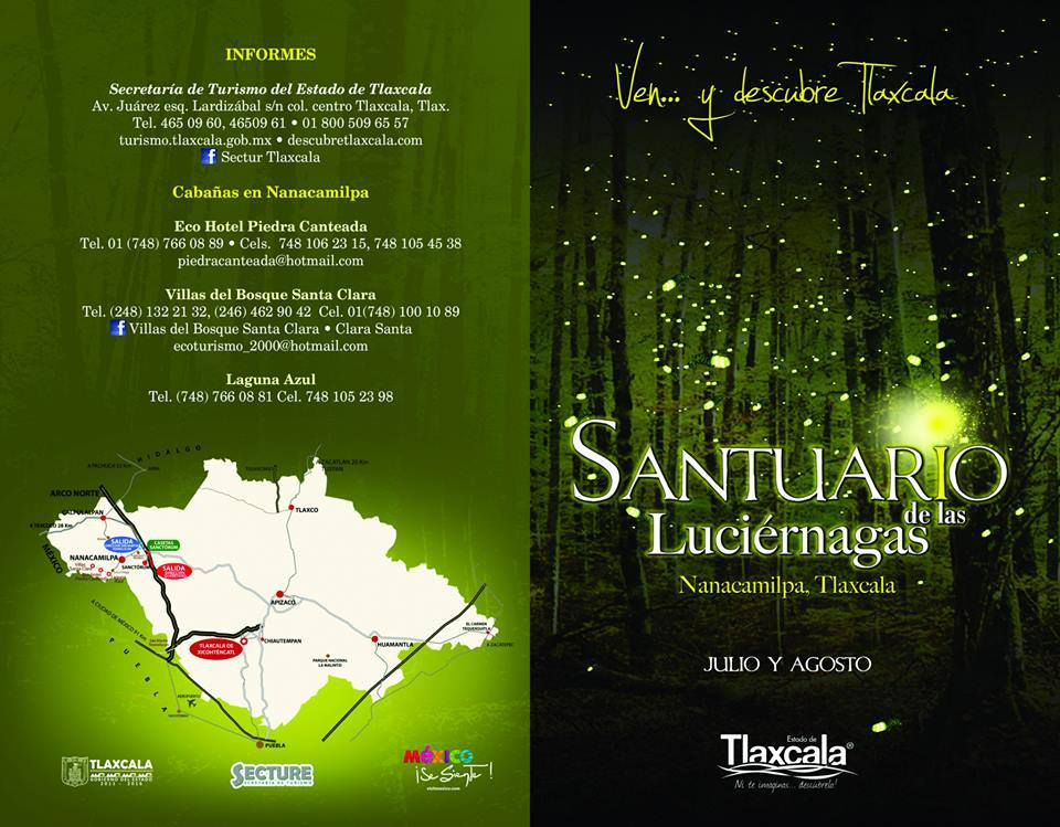 Arranca festival de las luci rnagas en nanacamilpa tlaxcala Espectaculo de luciernagas en tlaxcala