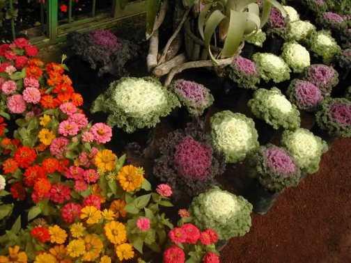 Realizan expo flores y plantas en atlixco del 12 al 21 de for Viveros de plantas en atlixco